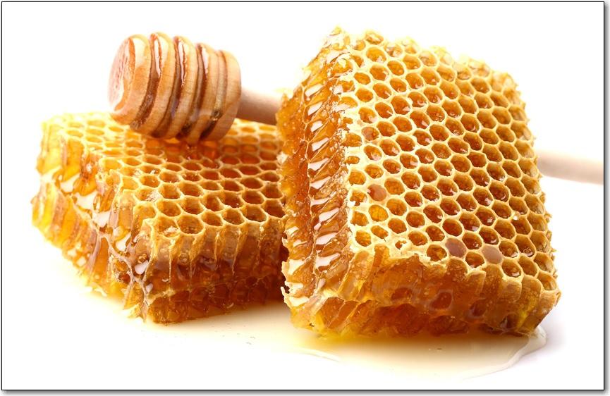Bee Blogs -December 2016