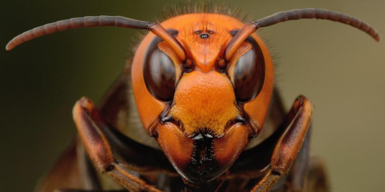 Bee Blog – February 2017