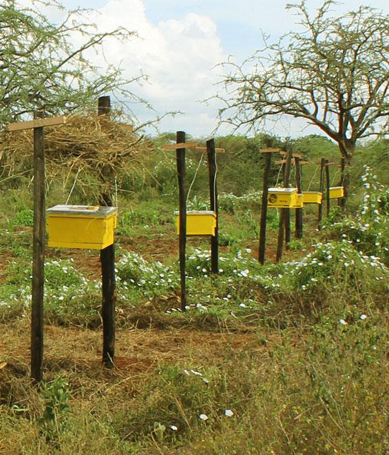 Bee Blogs – July 2017