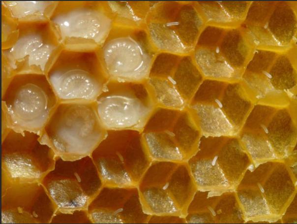 Bee Blogs  January 2019